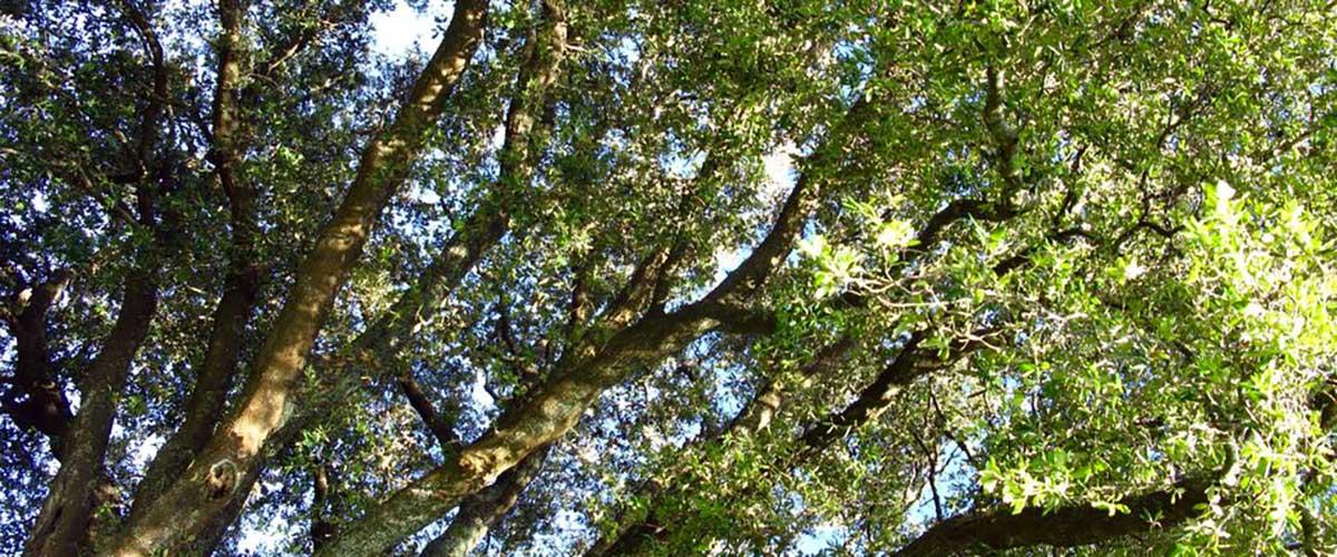 big-tree1200