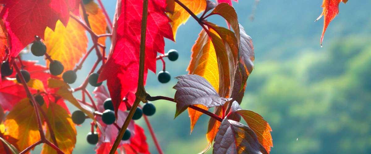feuilles-rouges-flou1200