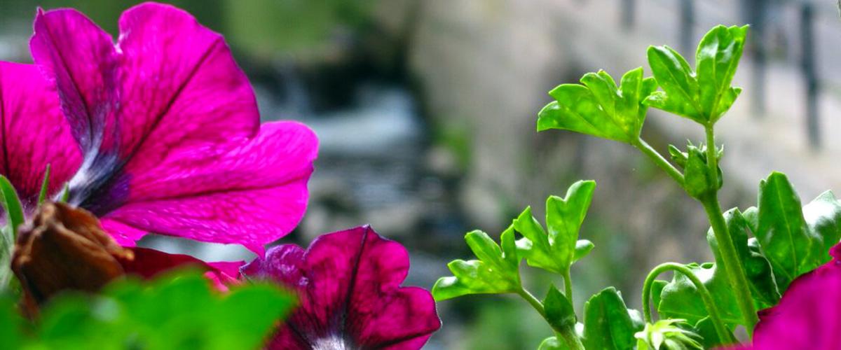 fleur-de-village12001